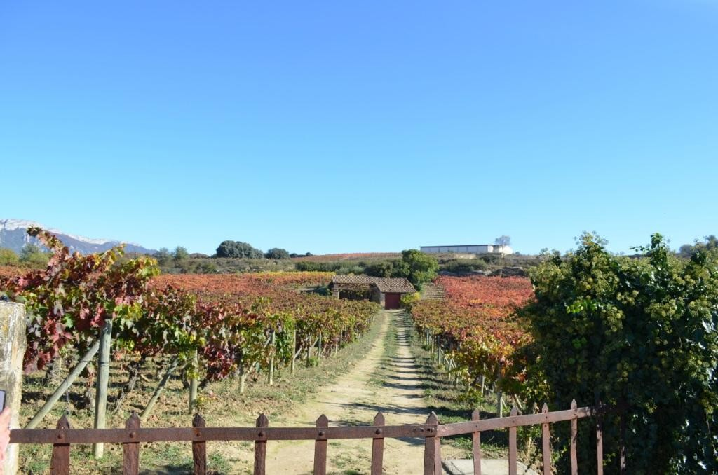 Artadi's and one of Spain's greatest vineyards: El Pisón