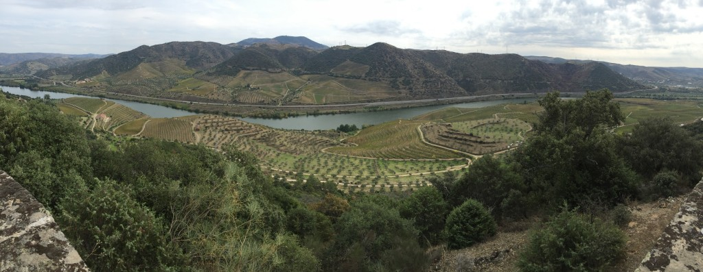 Meao oilve groves and vineyards before the river, view is from the Chapel.