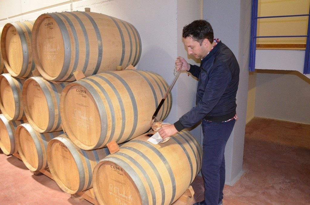 Barrel samples helped us to get familiar with the differences in terroir of the different vineyards as they are vinified separately.